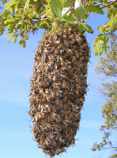 bee hive removal