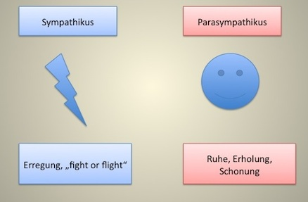 Sympathikus und Parasympathikus