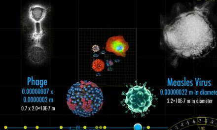 Magnifying the Universe – visualise the big and the small