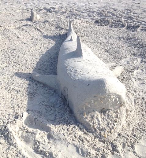 White-Cabana-sand shark-3