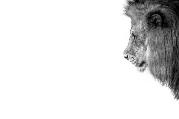 he_lion