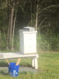 new split hive in the orchard
