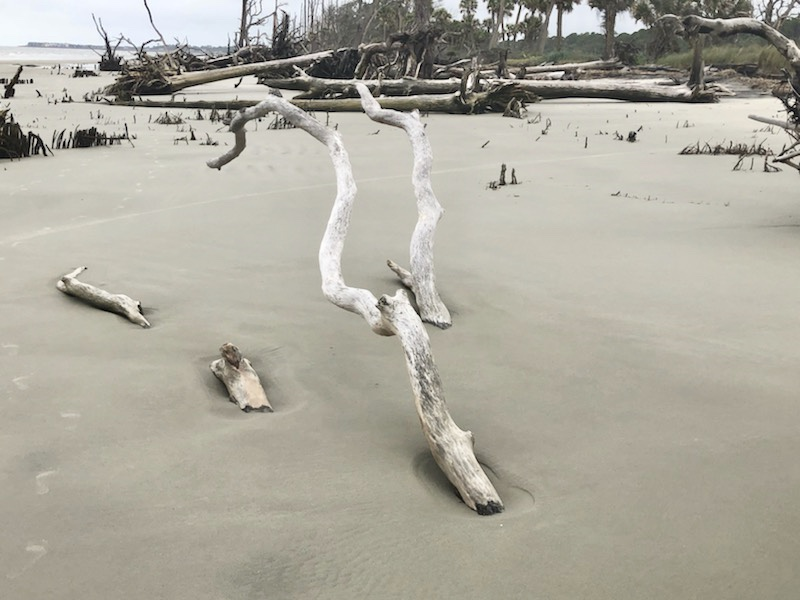 South Carolina Hunting Beach