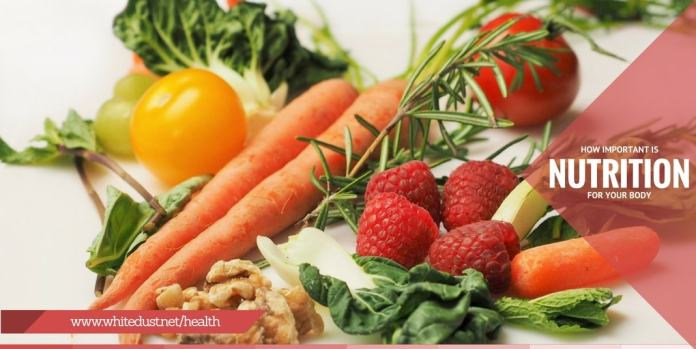 How Important Is Nutrition For Your Body