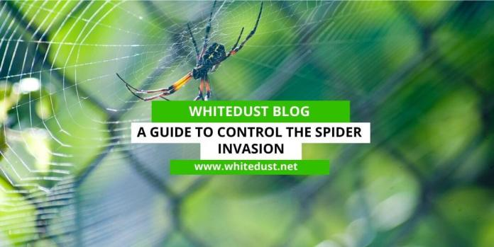 A Guide to Control the Spider  Invasion