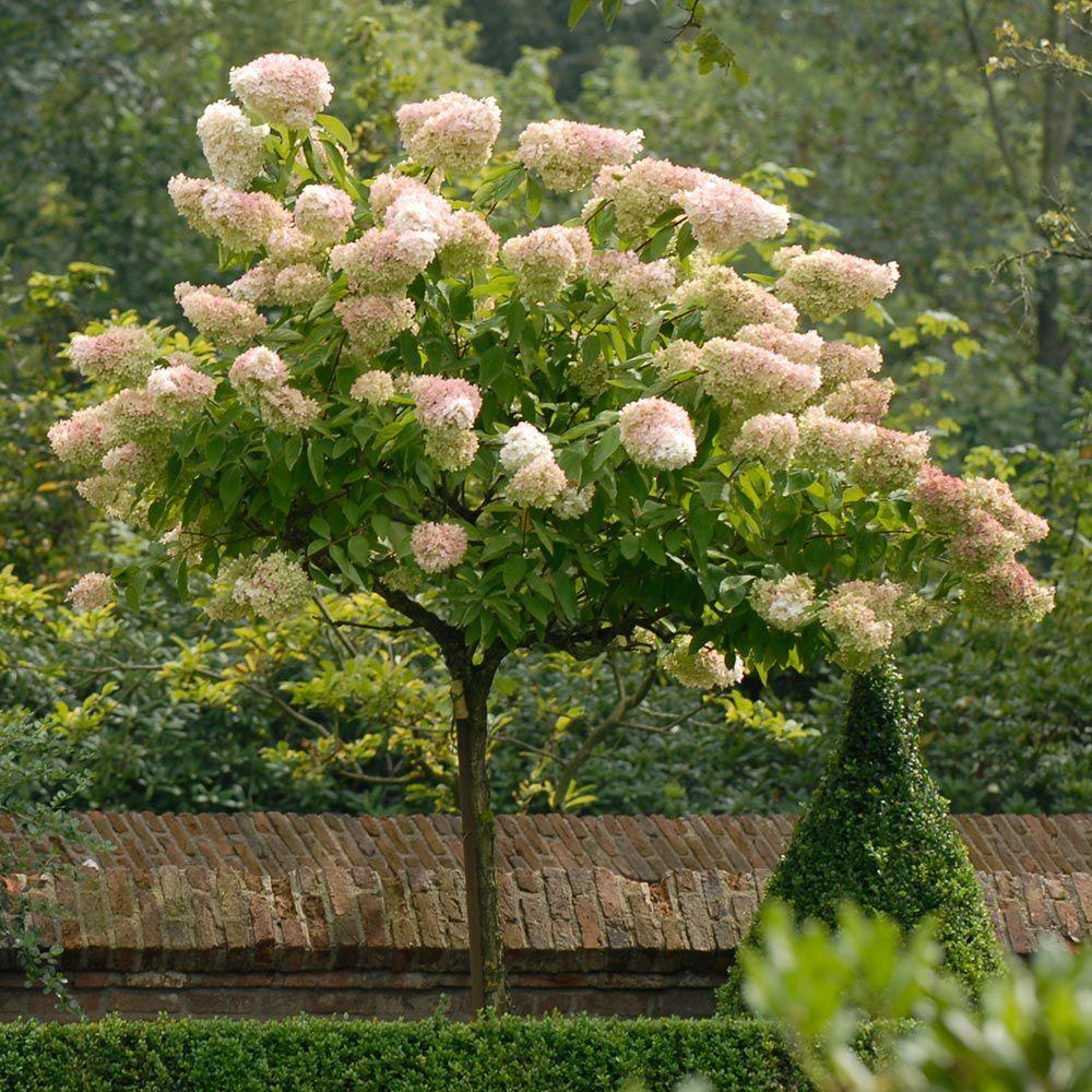 Garden Designs Medium Gardens