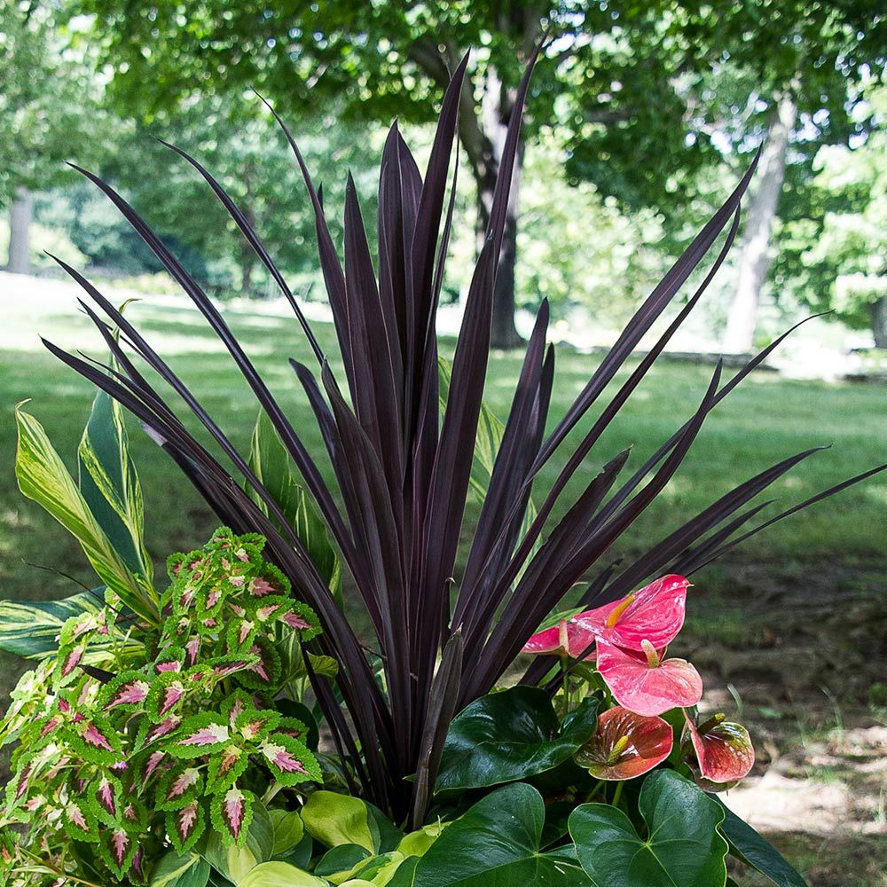 Zone 3 Plants