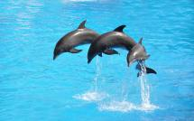 Mystic Aquarium Exhibits Encounters Shows And 4d Movies