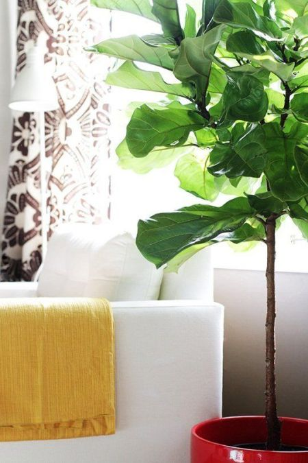 The Best Faux Plants and Where To Buy Them, Fake Plants, Inexpensive Faux Plants