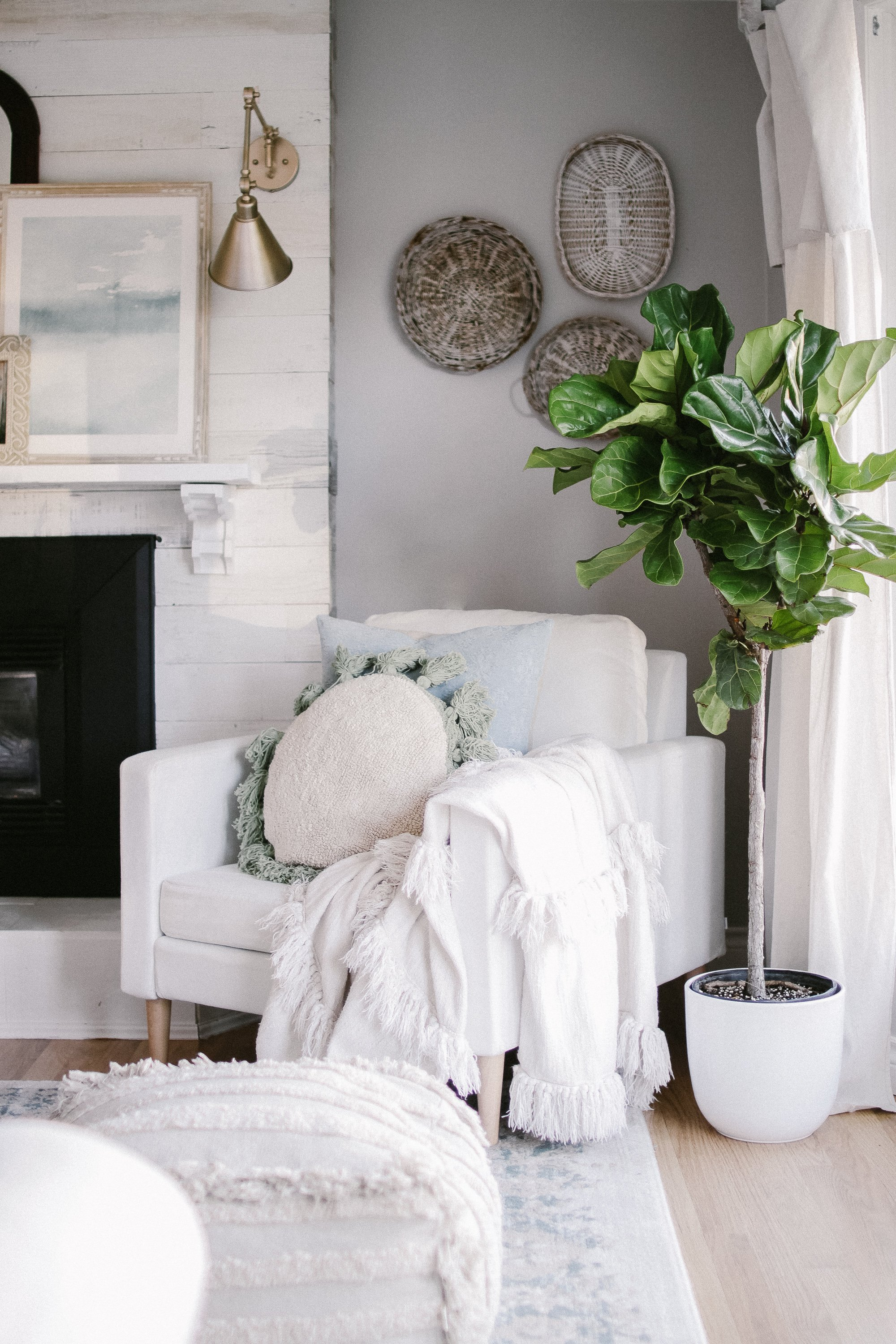 How TO Care For Fiddle Leaf Fig Trees - Meet Lola our Fiddle