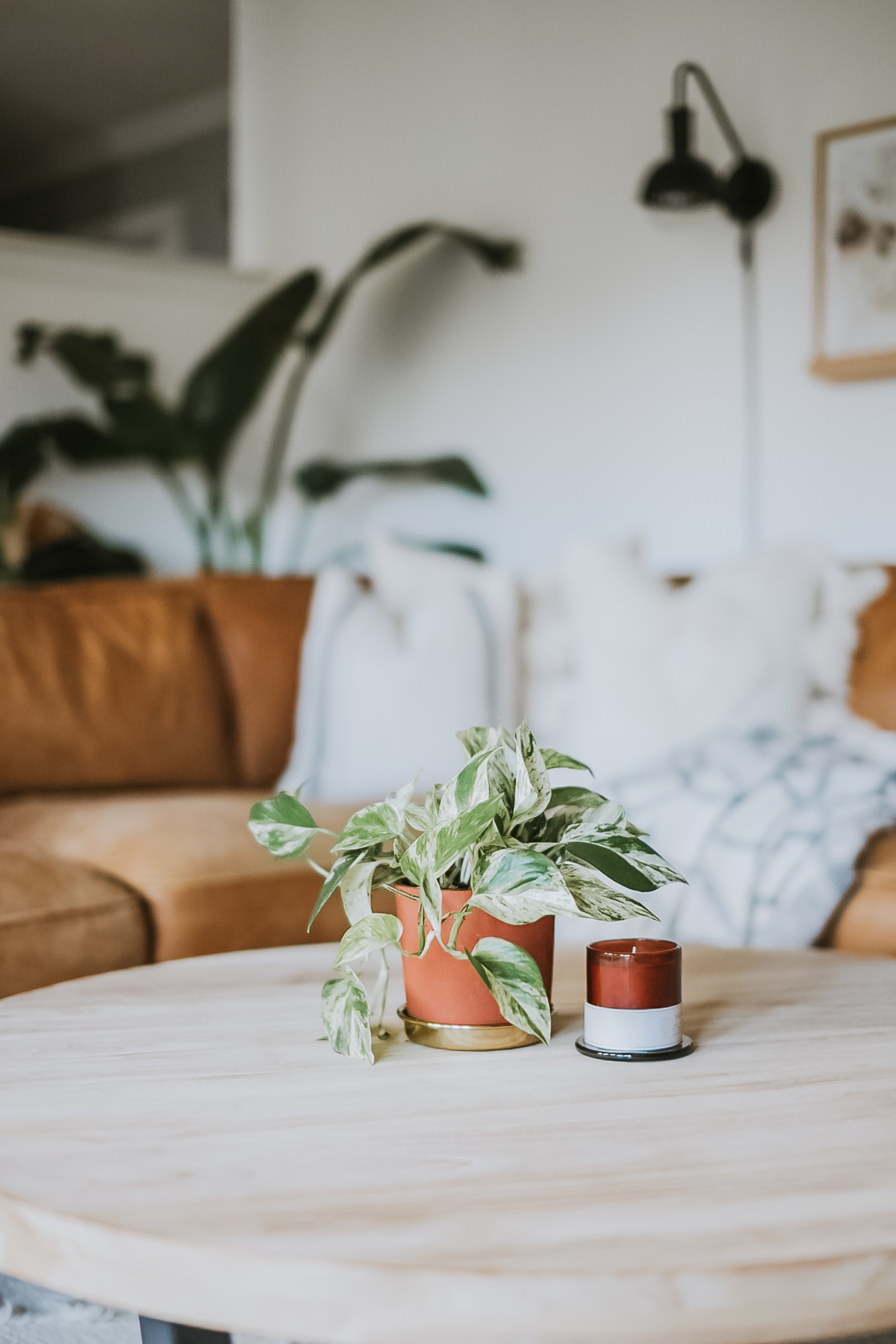 Where to find low maintenance house plants for cheap. How I find climbing house plants for under 10 dollars. Plants that are easy to keep alive