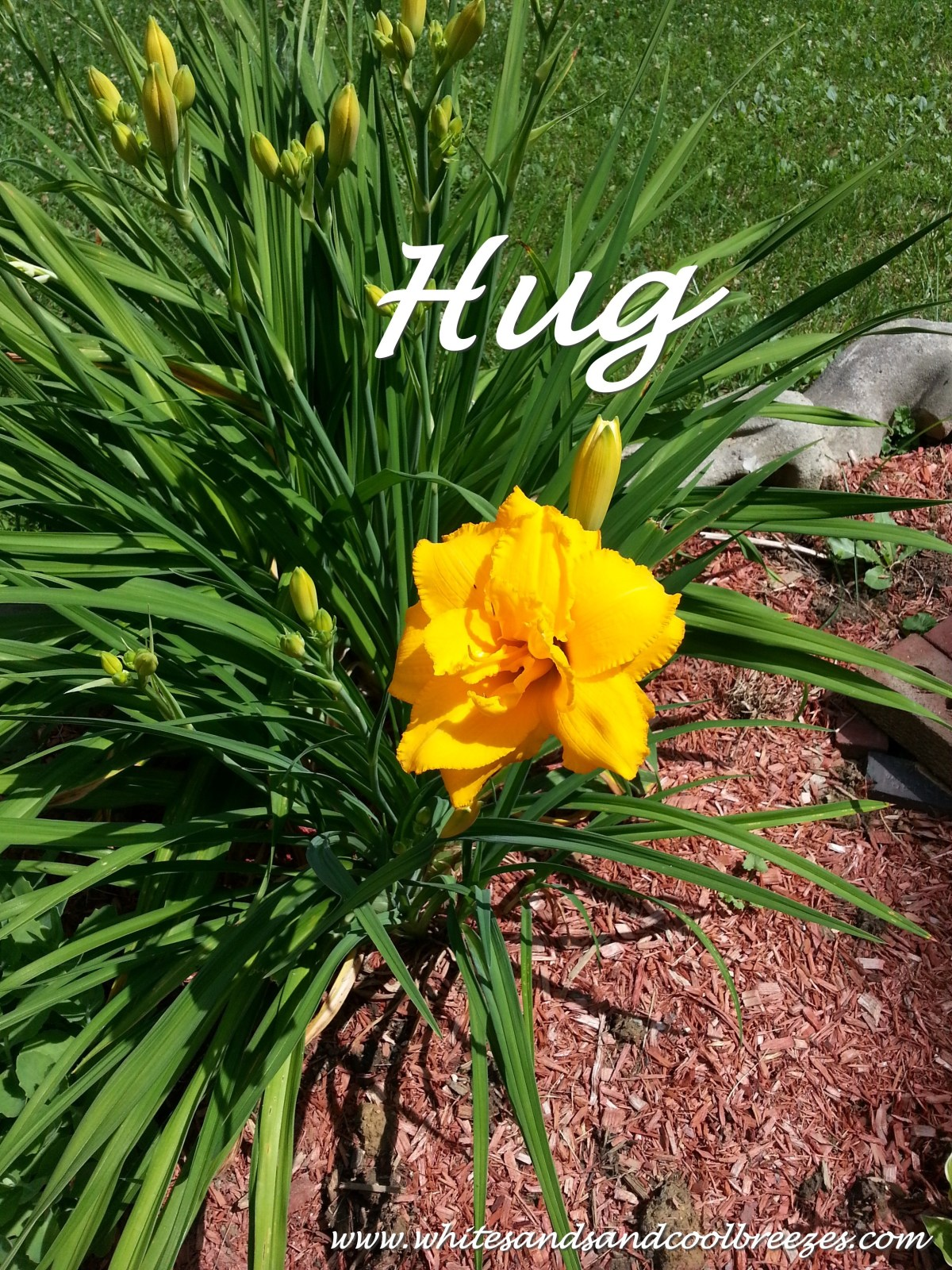 Hug- Thought for the Every Day
