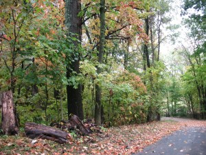 Leaves changing colors. 10 Fall things that make me Happy. What Fall things make you happy?