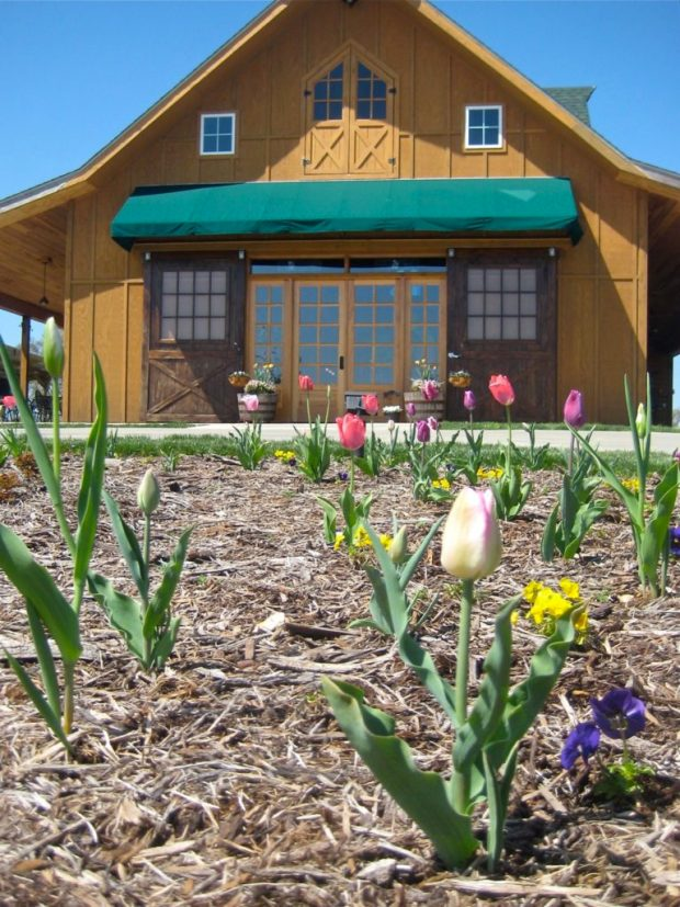 Tulips&Winery_2