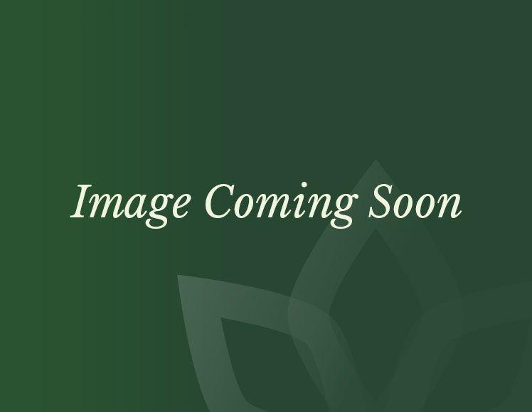 Nova  Amelia Fireglow 6 Seat Rattan Dining Set  135m