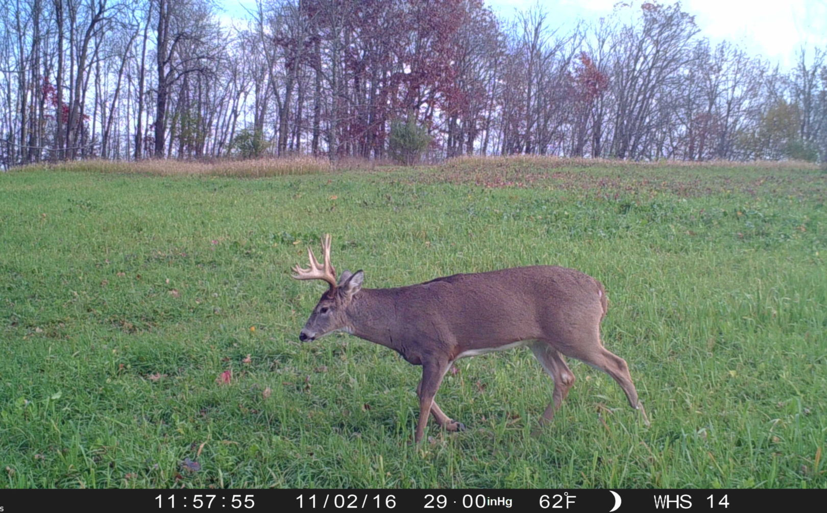 Great Deer Habitat Without Quality Food Is Dead