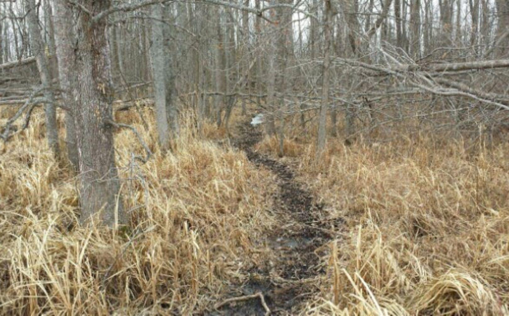 Deer Bedding Area Tactics
