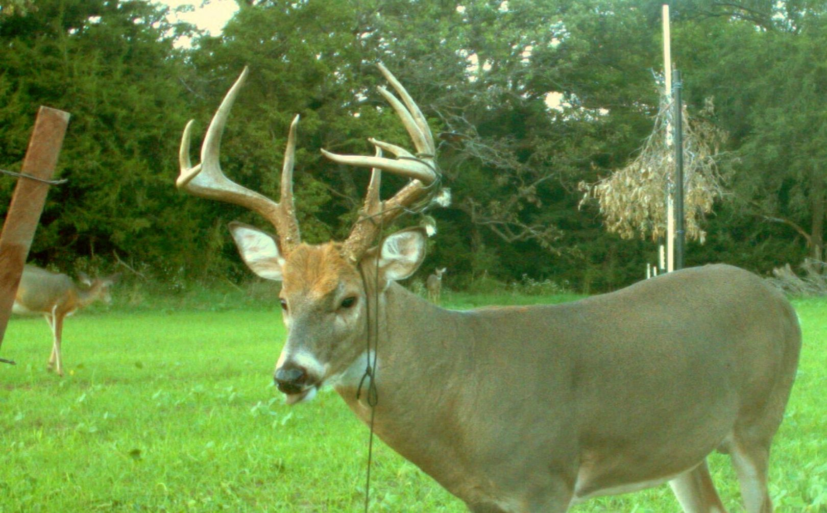 How To Build A Better Deer Trap
