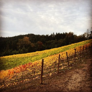 Whitetail Ridge Vineyard - Oregon Wine