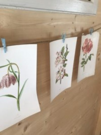 botanical prints e1504253594559 225x300 - The Shepherds Hut - decorating the inside of beautiful Belle