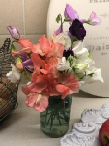 sweetpeas 2 e1507270837799 225x300 - Flowers - Vintage and Thrifty Styling for the Home