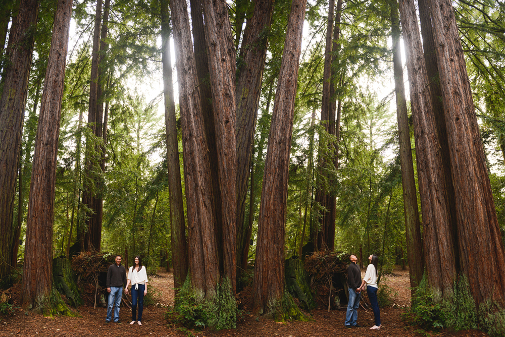 California Forest Engagement Session  Petrise  Rich  Gilroy Photography  Morgan Hill