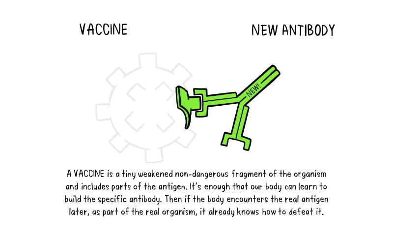 Vaccines Antibody illustration 02_29 Oct