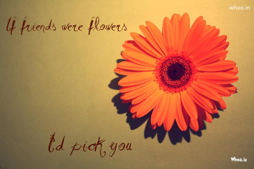 Christian Wallpaper Fall Happy Birthday Happy Friendship Day Quote With Orange Color Flowers