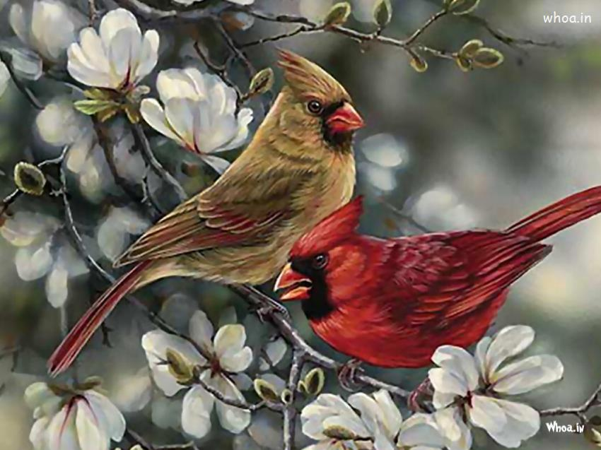 Cute Wallpaper For Facebook Cover Nightingale Hand Painting Hd Wallpaper