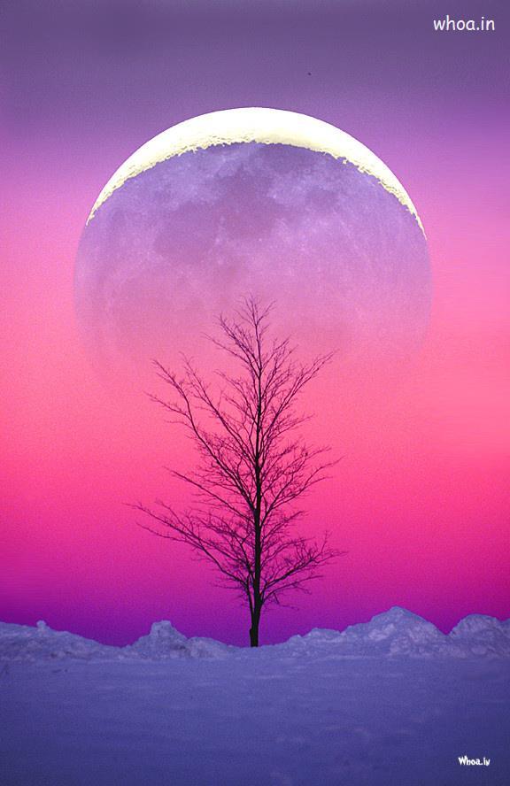 Dalai Lama Quotes Desktop Wallpaper Pink Natural Wallpaper