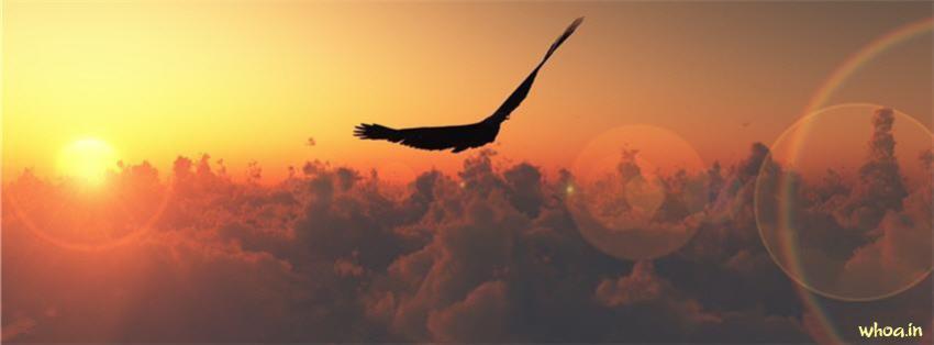 God Quotes Wallpaper Hd Sunshine Flying Bird Fb Cover