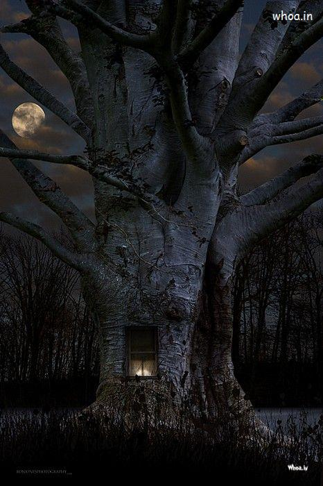 Tree Quote Wallpaper Mac Halloween Dark Night Tree