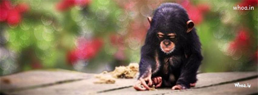 Girl Kiss Girl Wallpapers Lonely Monkey Facebook Cover