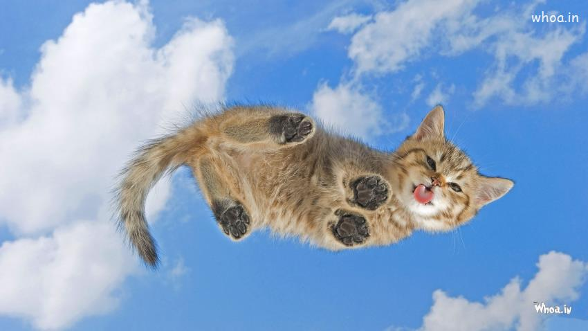 Cute Kitty Wallpapers Apps Funny Flying Cat Hd Wallpaper For Desktop