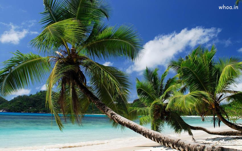 Tree Quote Wallpaper Mac Real Natural Sea View With A Coconut Tree