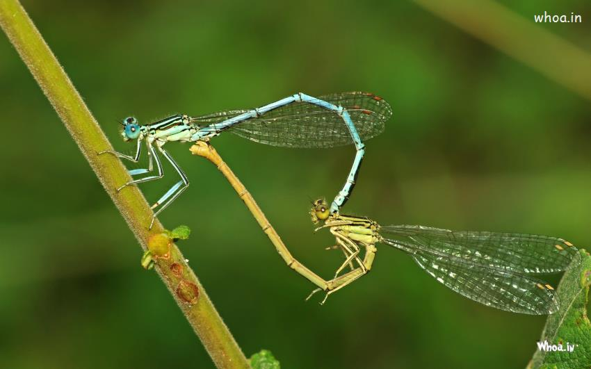 Cute Baby Wallpaper For Windows 7 Small Insect Make Heart Shape Hd Love Wallpaper