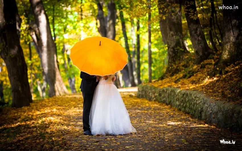 Cute Teddy Bear And Love Wallpapers Download Young Married Couple Kissing In Yellow Umbrella Hd Couple
