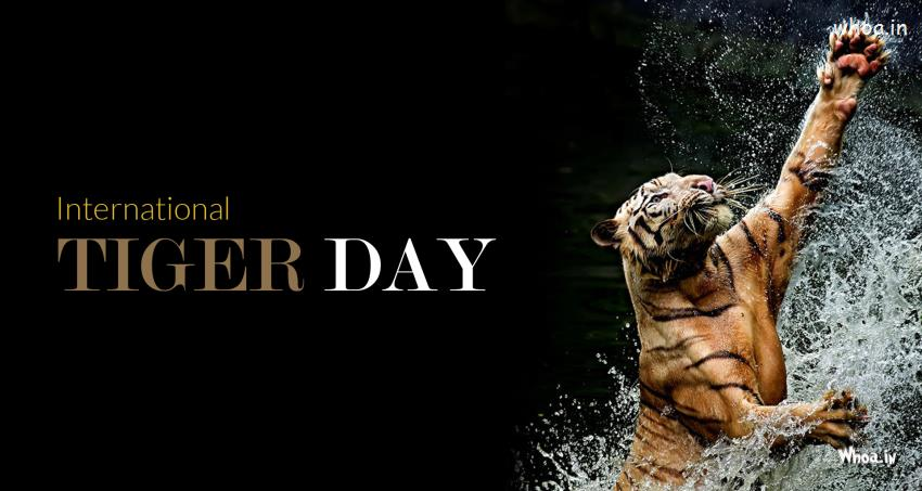 Good Morning Cute Baby Hd Wallpaper The International Tiger Day 29 July