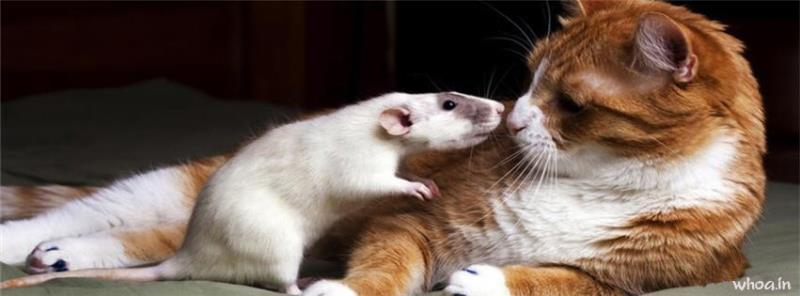 The Lord Shiva Hd Wallpapers Cat And Rat Kiss Facebook Cover