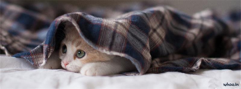 Kajal Agarwal Cute Wallpapers Free Download Funny Cute Kitten Facebook Cover 2