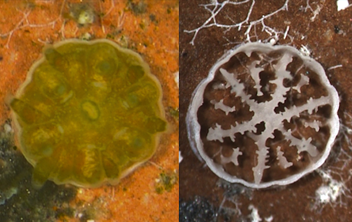Coral and ocean acidification