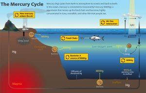How Does Toxic Mercury Get into Fish? : Oceanus Magazine