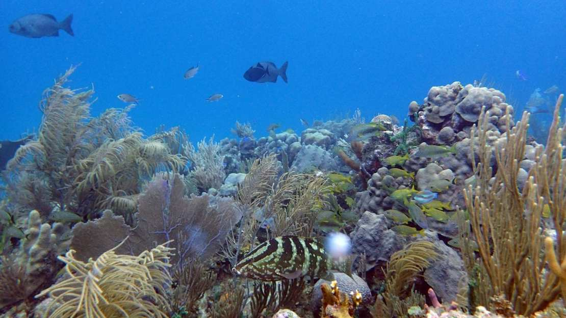 A healthy reefscape in the highly-protected Jardines de la Reina (Gardens of the Queen), Cuba