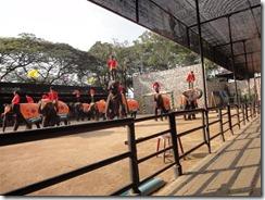 Elephant show at Noong Nooch Village