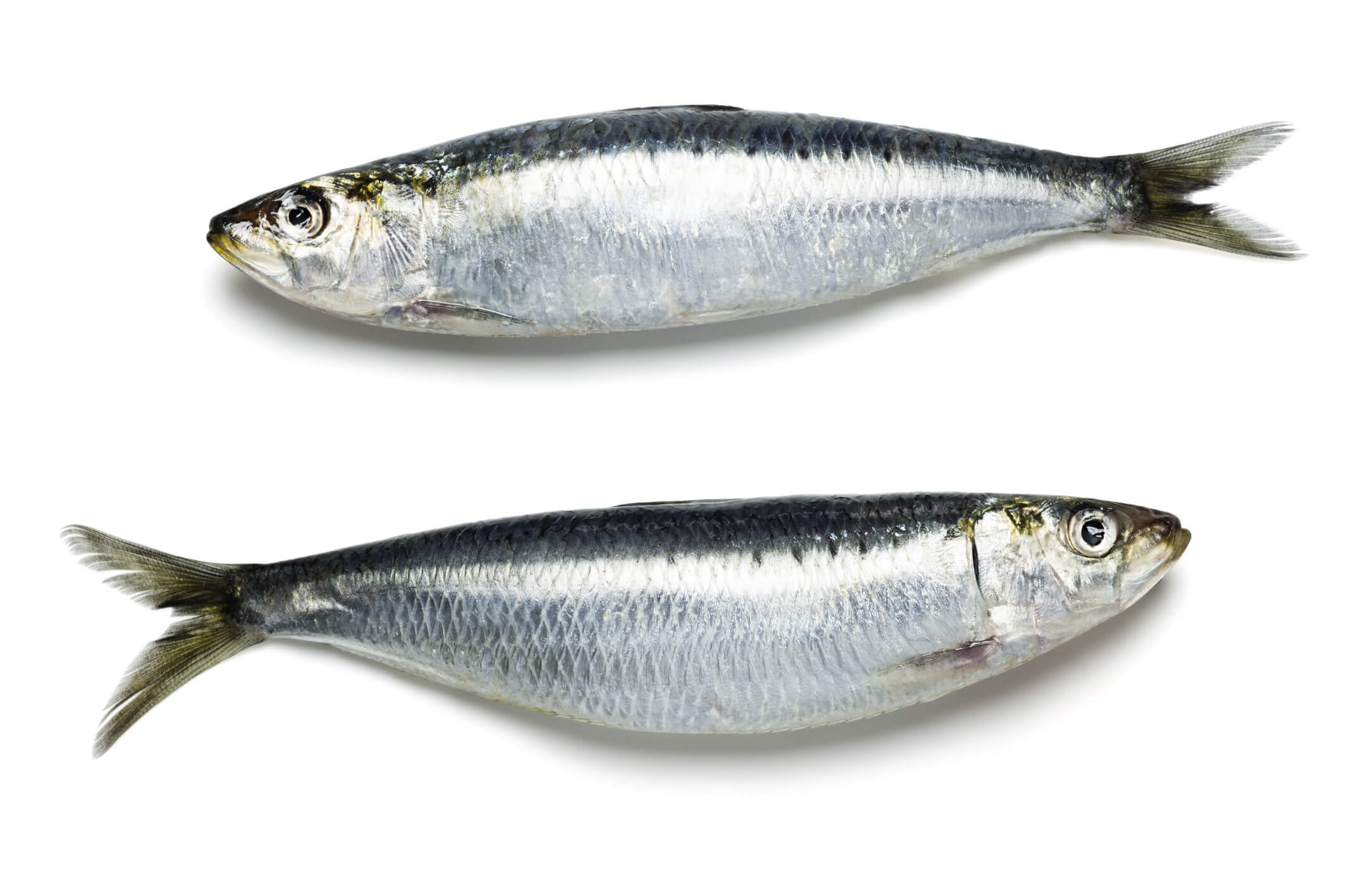 fresh sardines for dogs and cats