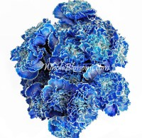 Buy Blue Carnations at Wholesale Price