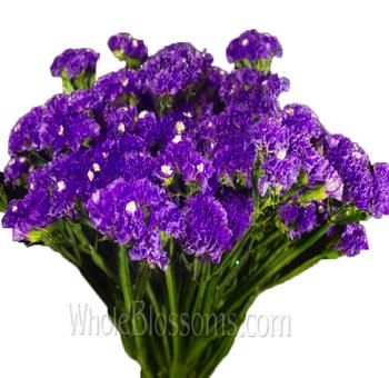 Wholesale Tissue Culture Statice Blue Purple Flower