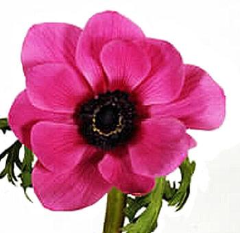 Anemones Floral Trends DIY Wedding Ideas Flower Tips