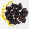 Edible Mopane Worms For Sale
