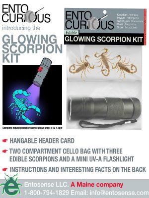 Museum Scorpions